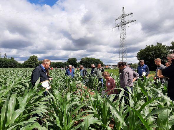 Einige Teilnehmer der Innotour 1 bei der Bodenprofil-Analyse im Maisfeld Foto: vlf Bayern